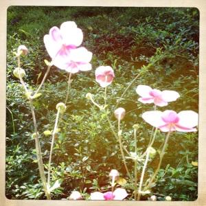 flowers under hot sun