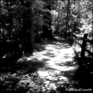 black-and-white forest path
