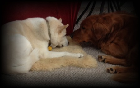 Bodhi checks in with his sister, Coyote