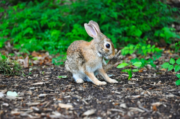 Photo of little brown bunny