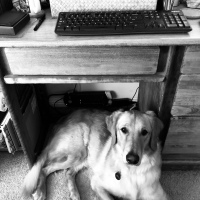 Official writing partner